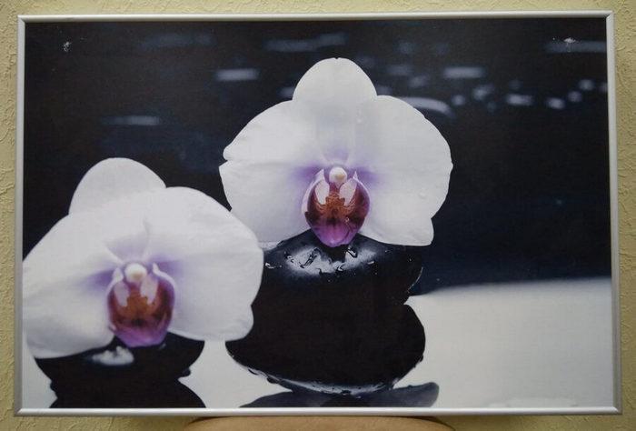 Интерьерная печать на бумаге «Цветы»