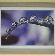 Картина в декоративной рамке Свежесть дождя 390х280 мм