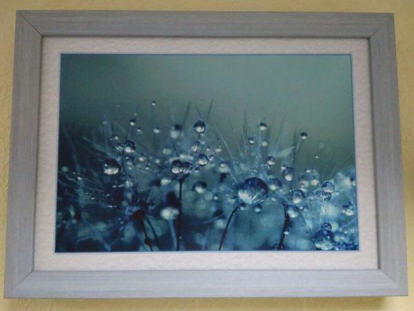 Постер в рамке «Цветы после дождя» 390x280 мм