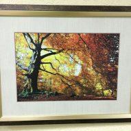 Картина в декоративной раме Вековое дерево 450x350 мм