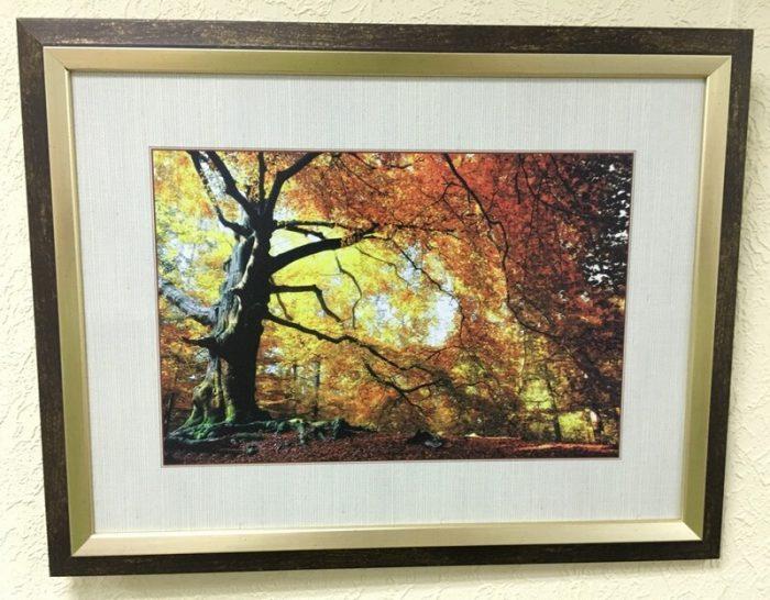 Постер в декоративной раме «Дерево» 450x350 мм